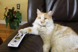 mrcat-remote-control